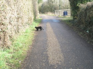 Black_cat_crossing_my_path_in_Canal_Walk_-_geograph.org.uk_-_1169749